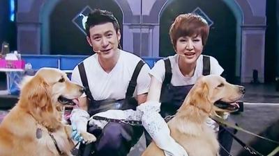 陆毅夫妇为导盲犬洗澡 爱心惩罚宣传爱护导盲犬