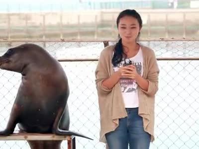 李访瑞带你看海豚亲吻美女