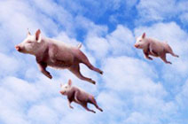 别研究风 研究猪!