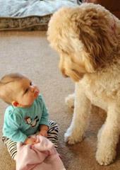 《狗之心》