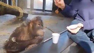 游客为大猩猩变魔术