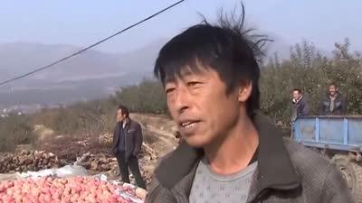 苹果滞销果农盼收购 宁夏枸杞辽宁种