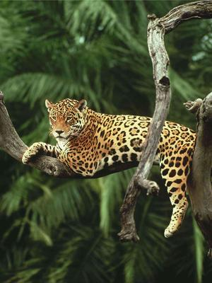 热带雨林的魅力
