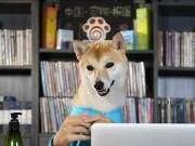 最聪明的十种犬类 你家狗狗排第几