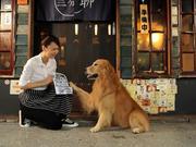 能让宠物做外卖员的餐厅,你见过吗?