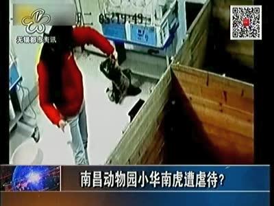 南昌动物园小华南虎遭虐待?