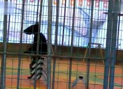 动物园动物表演- 在线观看
