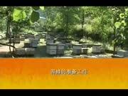 蜜蜂养殖技术 新式中蜂养殖蜜蜂养殖技术
