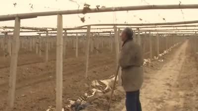 又是一年收蛙季 农村独居老人问题多