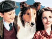 灵犬莱西 1943年版