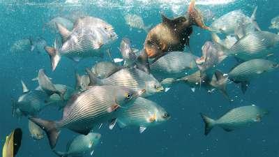 壁纸 海底 海底世界 海洋馆 水族馆 400_225