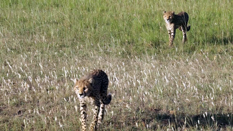 北石走进非洲草原看动物