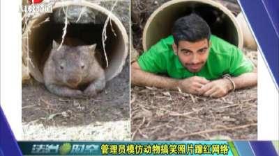 管理员模仿动物搞笑照片蹿红网络