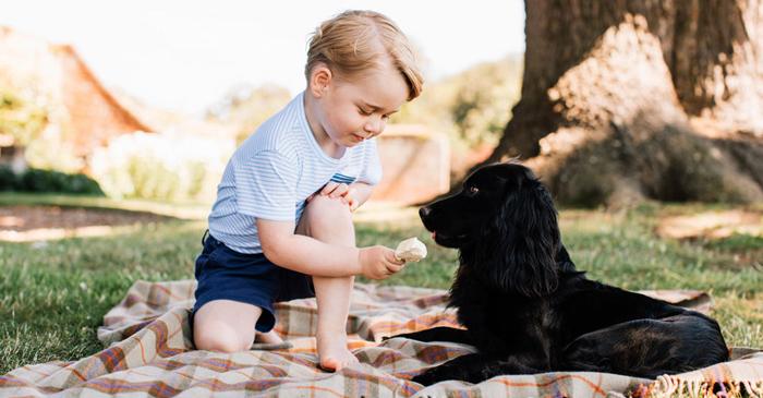 乔治小王子半跪喂食狗狗 却被指虐待动物