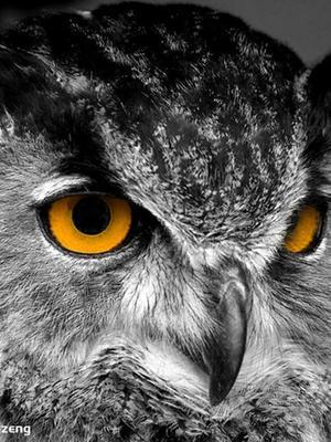 猫头鹰历险记