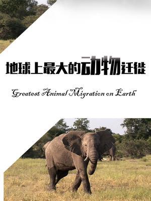 地球上最大的动物迁徙