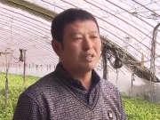 《黑土地》20160301:绿皮绿瓤香瓜熟了 辽北雪村特色农家乐