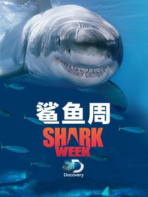 Discovery:鲨鱼周