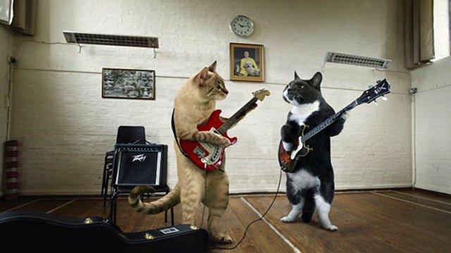 这货要成精!天才猫咪弹吉他