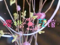樱桃花艺馆   用花改变家庭环境