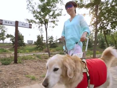 假如我有三分钟黑暗 李响体验导盲犬引导