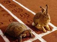终于知道龟兔赛跑时兔子为什么会输了