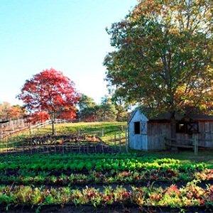 美国肯塔基州的葡萄酒复兴之路