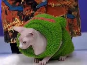 《美丽俏佳人》20170116:这里动物很神奇 无毛猫天生怕冷