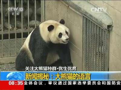 [视频]关注大熊猫种群·优生优育 新闻揭秘:大熊猫的语言