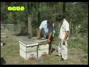 蜜蜂养殖技术视频全集(春夏篇)