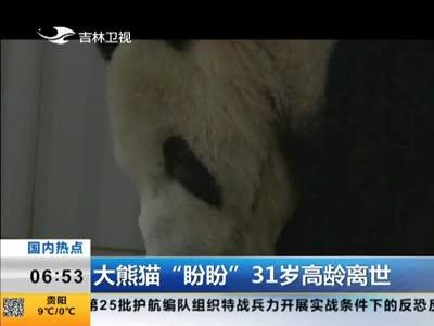 """[视频]最高龄大熊猫""""盼盼""""逝世 因患肿瘤去世享年31岁"""