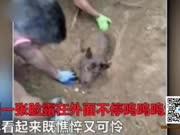小狗被残忍活埋只露脸 获救一天后因伤势过重安乐死