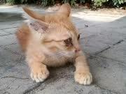 公园里撸到的超萌小橘猫 别只顾着撸猫也给点吃的啊