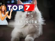 TOP 10 这10种萌宠猫咪太可爱了! 第一季上半部