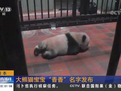 """[视频]日本:大熊猫宝宝""""香香""""名字发布"""