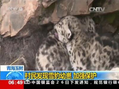 [视频]青海玉树 村民发现雪豹幼崽 加强保护