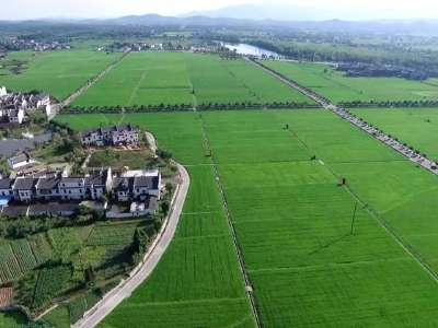【绿色发展 绿色生活】空中俯瞰全国最美稻田