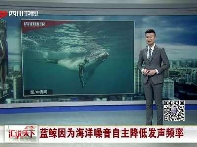 [视频]蓝鲸因为海洋噪音自主降低发声频率