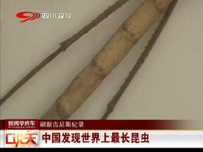 [视频]中国发现世界上最长昆虫