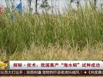 """[视频]探秘·技术:我国高产""""海水稻""""试种成功"""