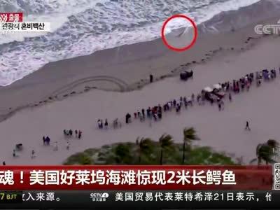 [视频]惊魂!美国好莱坞海滩惊现2米长鳄鱼