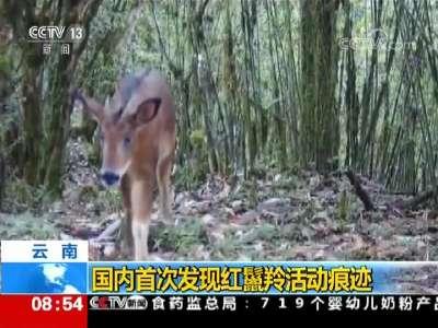 [视频]云南:国内首次发现红鬣羚活动痕迹