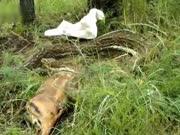 近4米长大蛇遇到人类 吓得吐出一整只羚羊