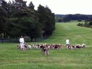 草地上训练一百多只皇家斗犬,打猎是一等一的好手啊
