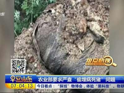 """[视频]农业部要求严查""""偷埋病死猪""""问题"""