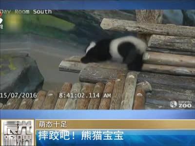 [视频]萌态十足:摔跤吧! 熊猫宝宝