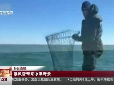 """[视频]冬日奇景:数百只海龟被""""冻晕"""""""