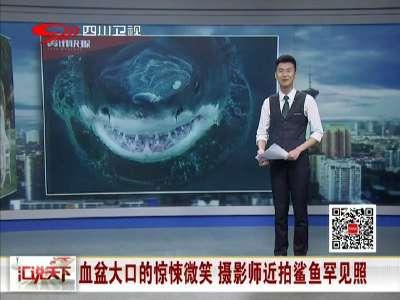[视频]血盆大口的惊悚微笑 摄影师近拍鲨鱼罕见照