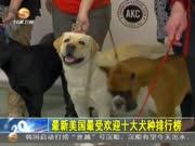 最新美国最受欢迎十大犬种排行榜