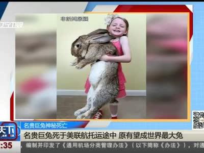 [视频]名贵巨兔神秘死亡:名贵巨兔死于美联航托运途中 原有望成世界最大兔